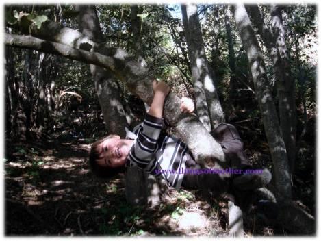 subiendo a los árboles